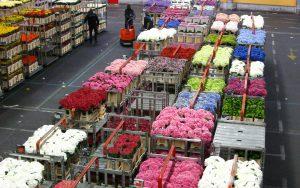 tijd-besparende-oplossingen-in-de-bloemen-en-planten-sector